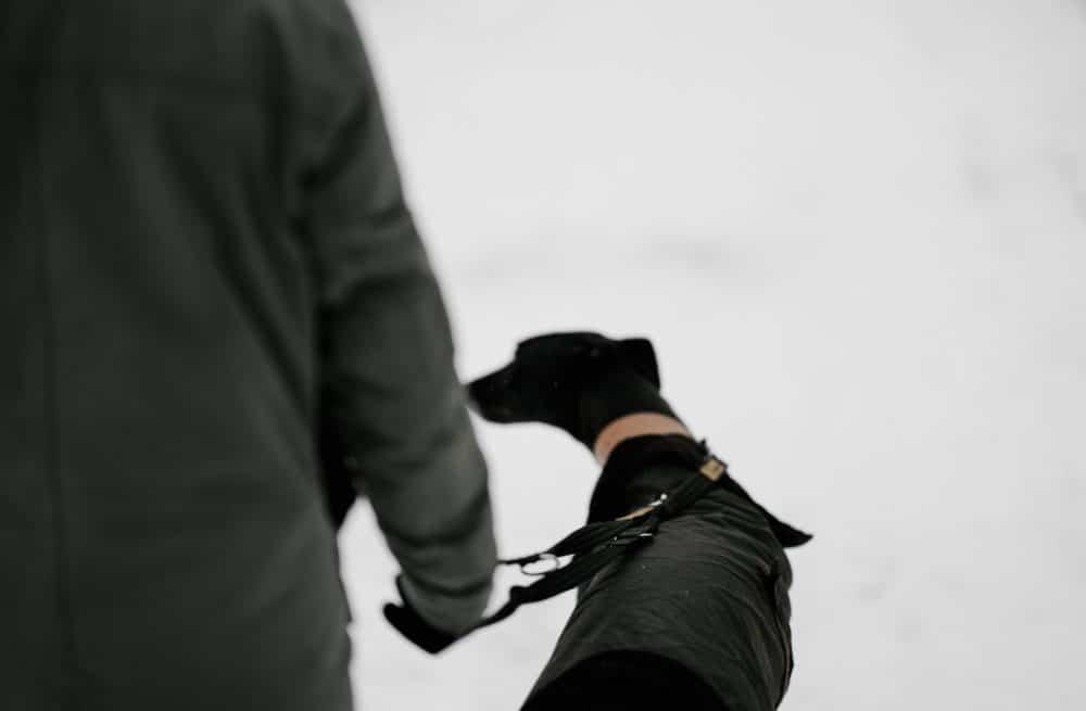 To show a dog on a leash.