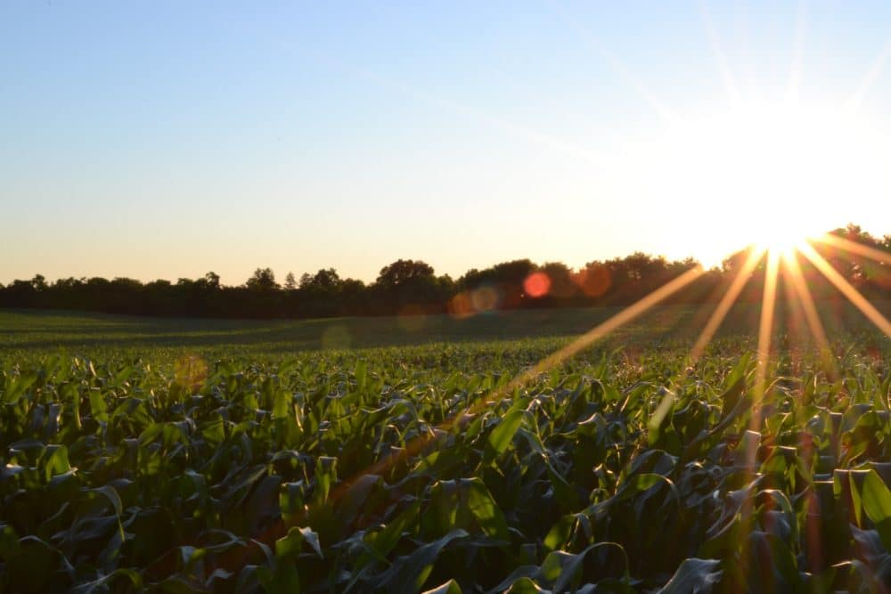 A field.