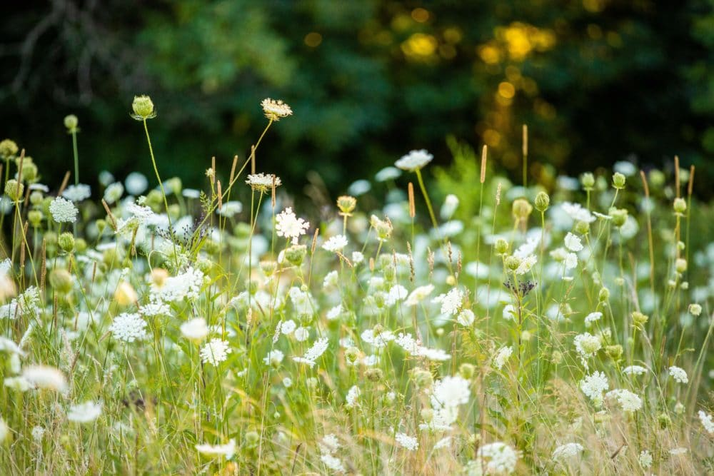 A meadow in Whips Ledges, Hinkley, Ohio/