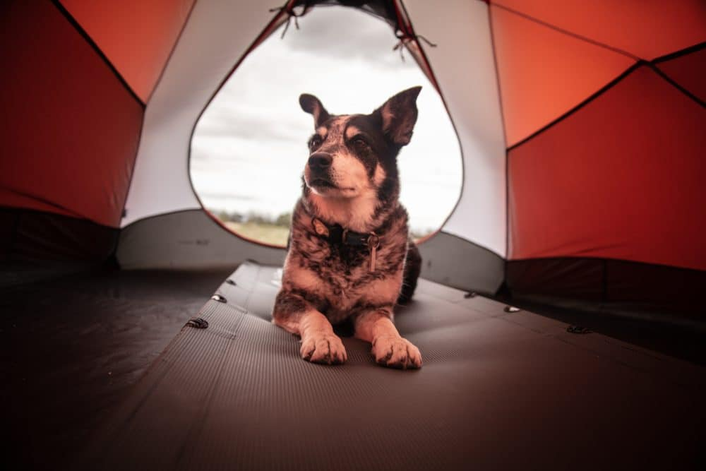 A dog on a camping mat in a tent.