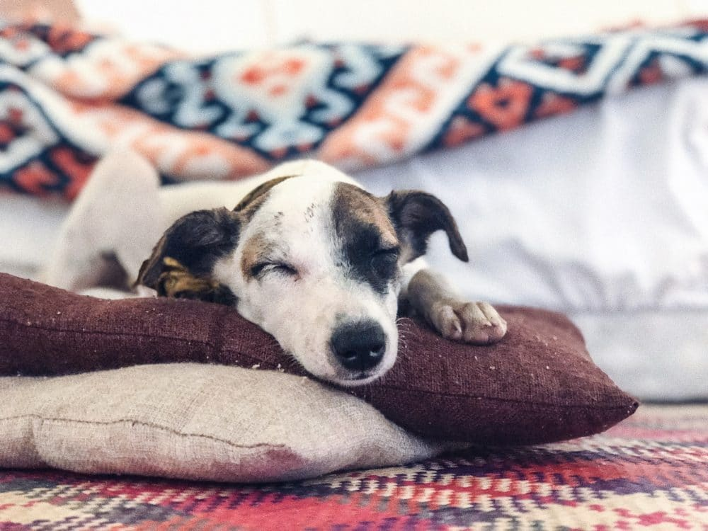 A dog sleeping on a pillow.