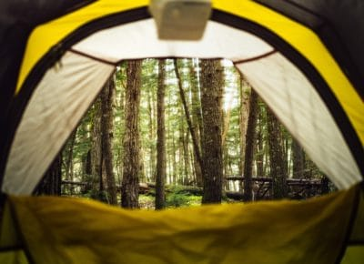 A view from inside a tent looking towards a forest.