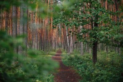 A dirt path through the woods.