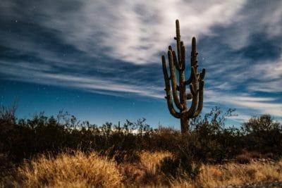 A cactus in Tucson, Arizona.