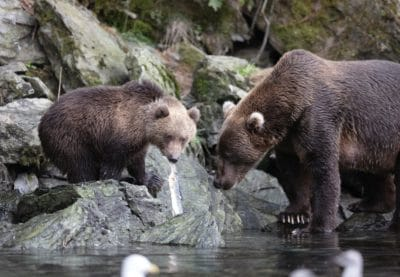 A mother bear and her cub by a creek.