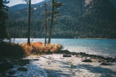Body fo water near trees photo.