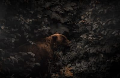 Brown bear beside plants and trees.