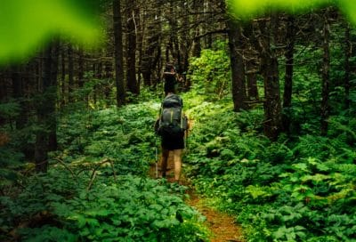 Person walking in the green forest.
