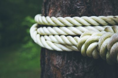 White rope tied to a brown tree.