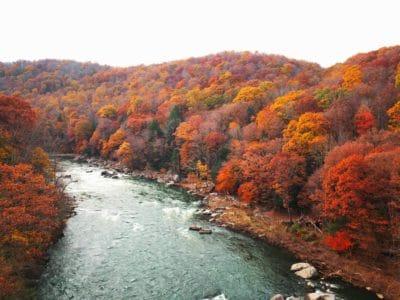A river going through orange trees.