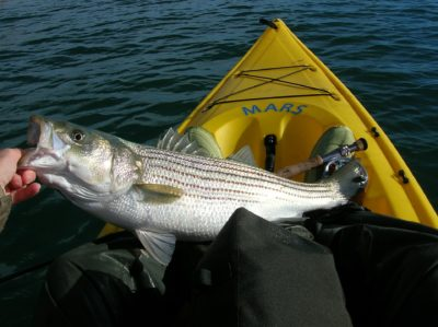 A bass on a kayak.