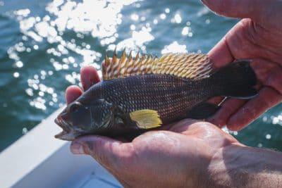 A man holding a fish.