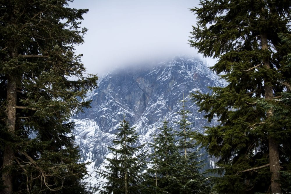 Pine trees and a snowy mountain.