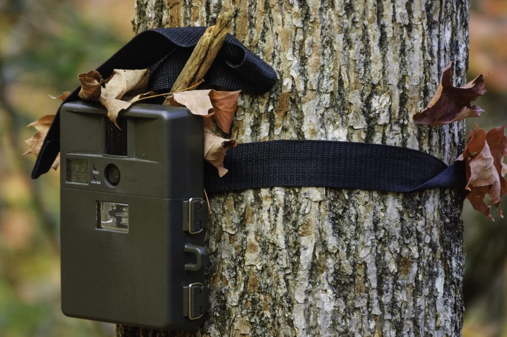 A game camera on a tree.