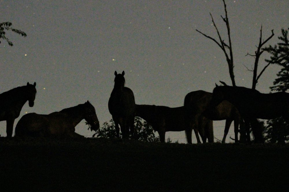 Some horses at night outside.