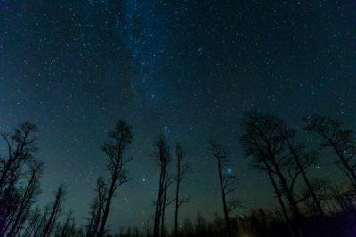 Cedar forest trees at night.