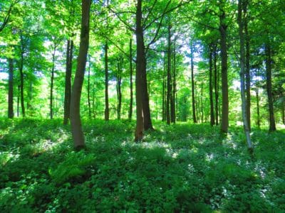 A green forest.