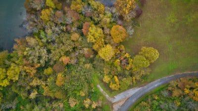 A forest near Nashville.