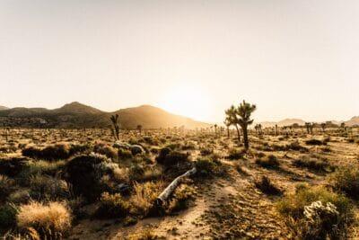 A desert near Hollywood.