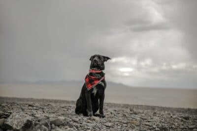 A black dog by the water on a cloudy day.