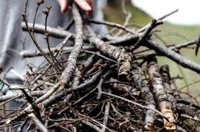 A bunch of sticks for building a fire.