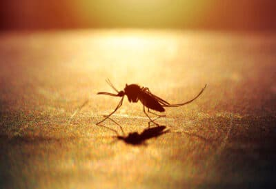 mosquito on sunset and silhouette background.