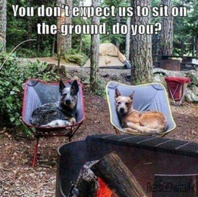 Funny Camping Puns - Shefalitayal